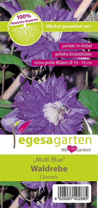"egesa garten Waldrebe ""Multi Blue"""