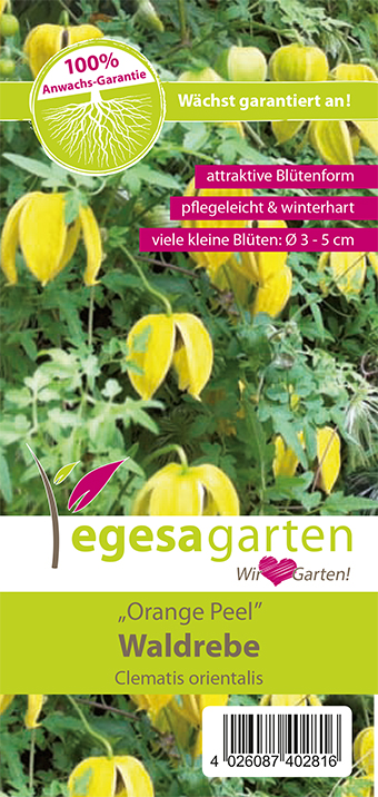 "egesa garten Waldrebe ""Orange Peel"""