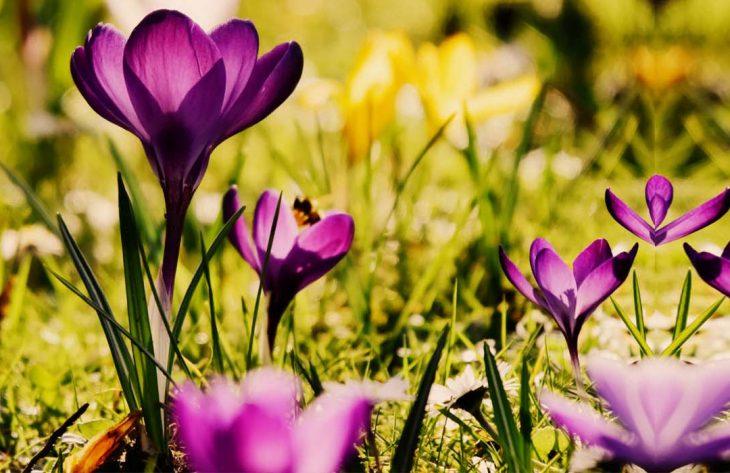 Gartenkalender März