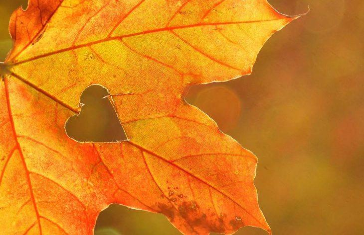 Gartenkalender Oktober