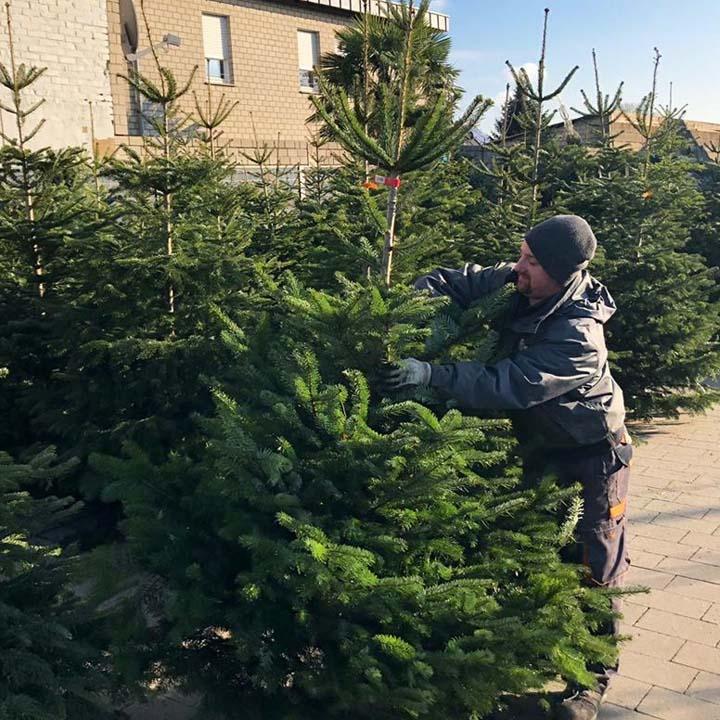 Tannenbaum Weihnachtsbaum Baesweiler