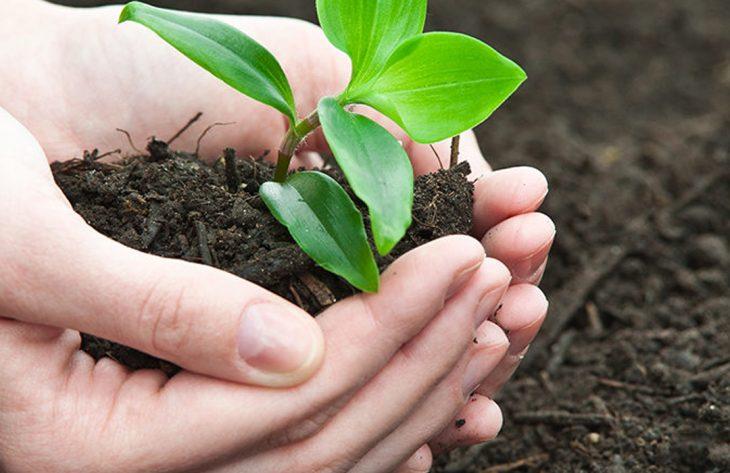 Wie vermehre ich Kräuter und Gemüse?